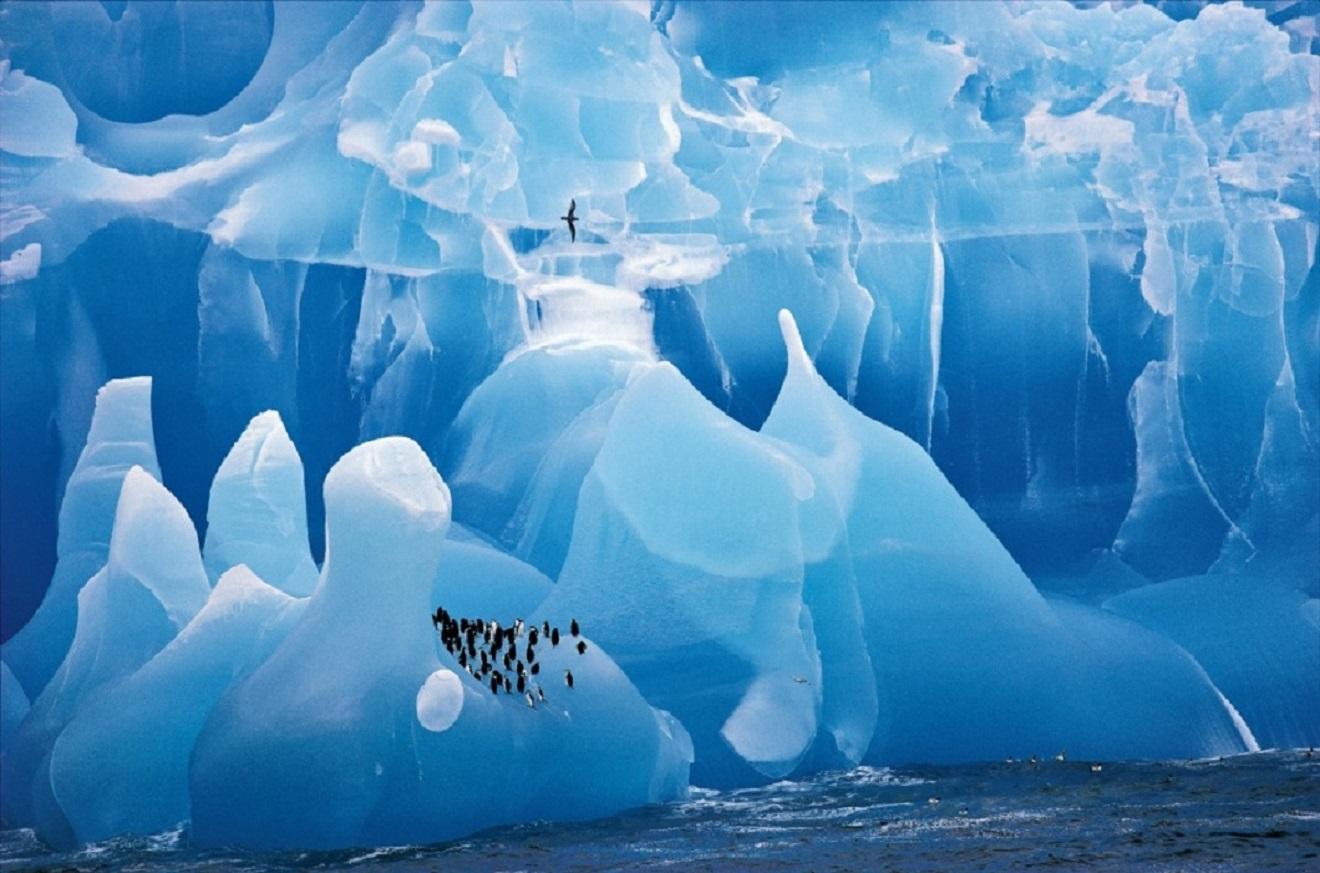 """Este colosal iceberg azul foi fotografado dende un barco xunto ás Illas Sándwich do Sur, na Antártida. É unha catedral de xeo antigo onde repousa unha colonia de pingüíns Adélie. A foto foi tomada por Cherry Alexander (Reino Unido) e gañou en 1995 o Wildlife Photo of the YearHoxe forma parte do libro """"50 year of Wildlife Photographer of the Year"""", que este mes de setembro ven de publicar o Nacional History Museum de Londres."""