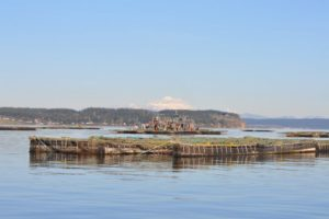 Criaderos de ostras y mejillones en Oregon (EEUU).