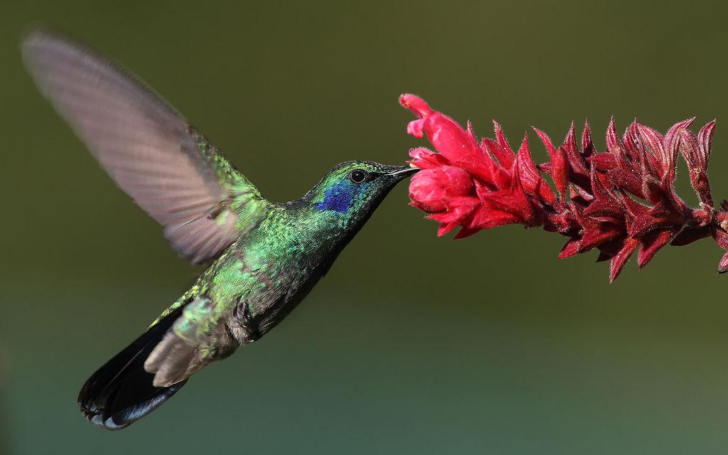 Un cambio no cheiro das flores pode afectar a polinizadores como aves e insectos.