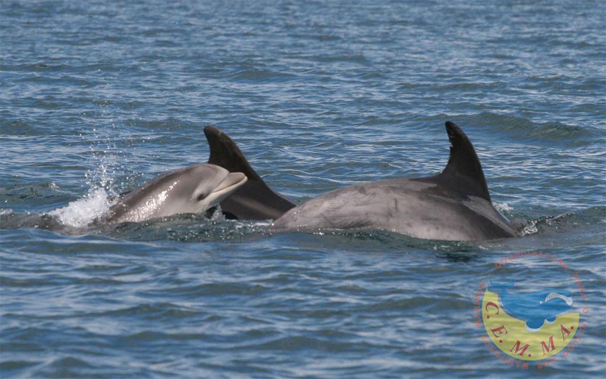 Delfins na ría de Vigo