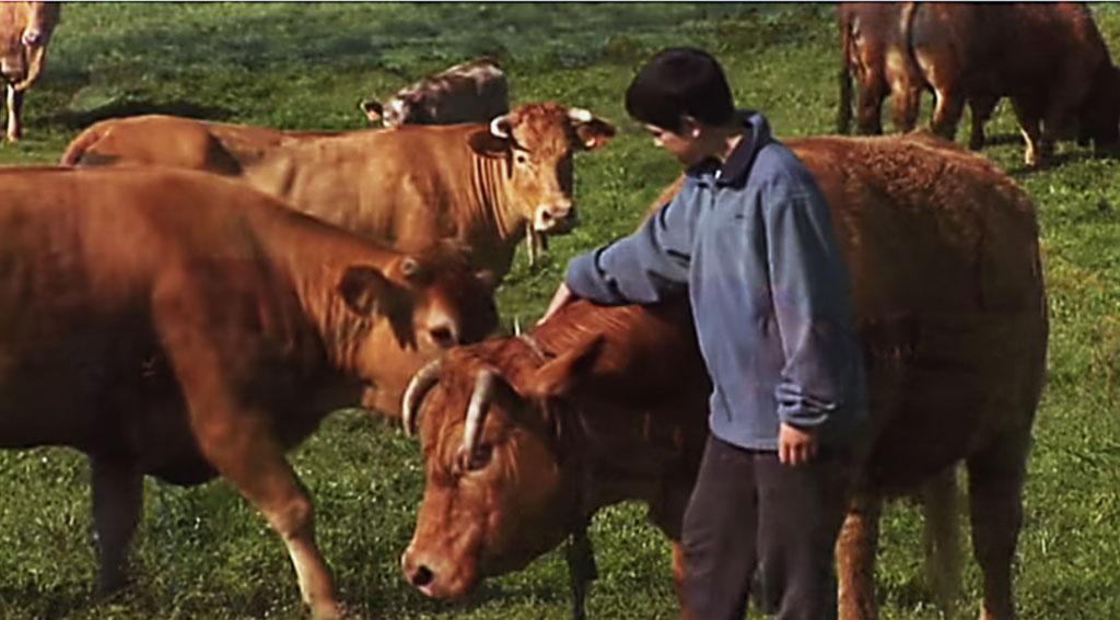 A agricultura ecolóxica facturou 5,3 millóns de euros no ano 2014.