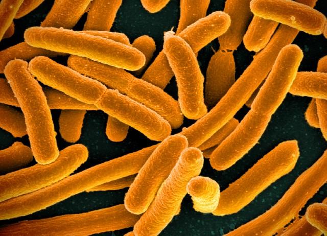 Frear a comunicación entre bacterias abre unha nova vía para os antibióticos.