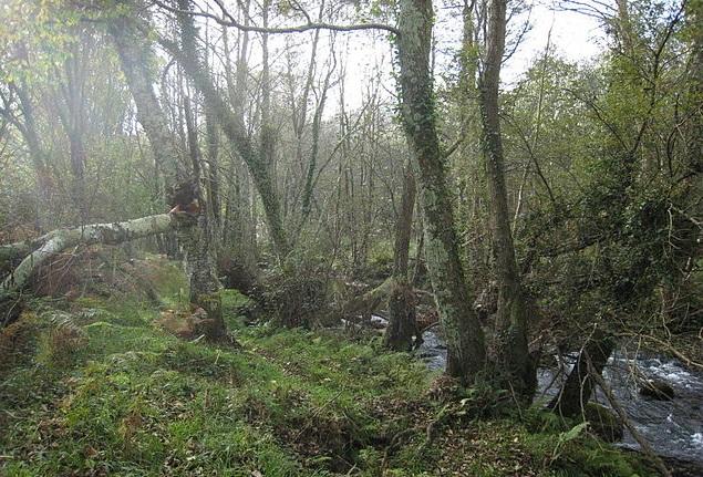 Ameneiros do río Landro.