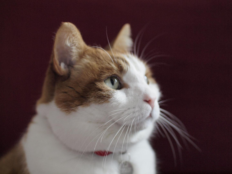 Os donos dos gatos saben pouco sobre o que fan no exterior estes animais.