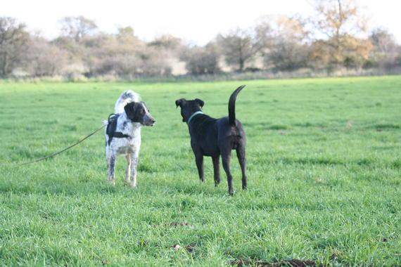 Os cans moven a cola a dereita ou esquerda expresando emocións.