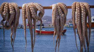 O polbo é unha bandeira da cociña de Galicia e tamén se consume no Mediterráneo.