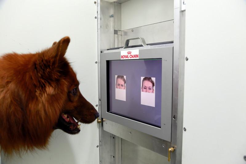 No experimento, os cans distinguían os rostros ledos dos enfadados.