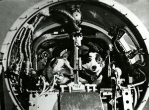 Belka e Strelka, a bordo do Sputnik 5.
