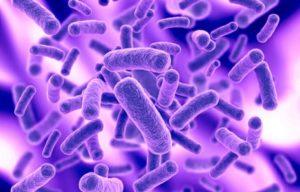 Patógenos causantes de la tuberculosis.