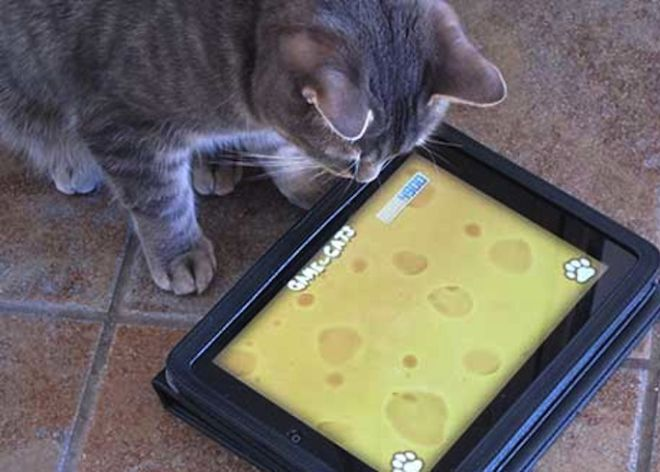 Unha app para gatos, entre as de maior éxito este ano.