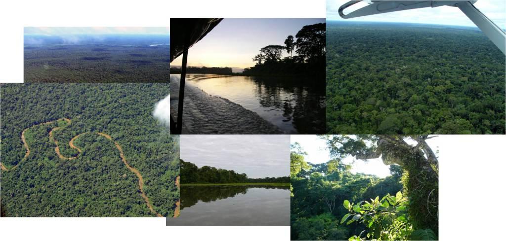 Hábitats (lacustre, fluvial, canopy) e vistas aéreas do parque nacional de Manu (fotos: G. Mucientes / BEC)