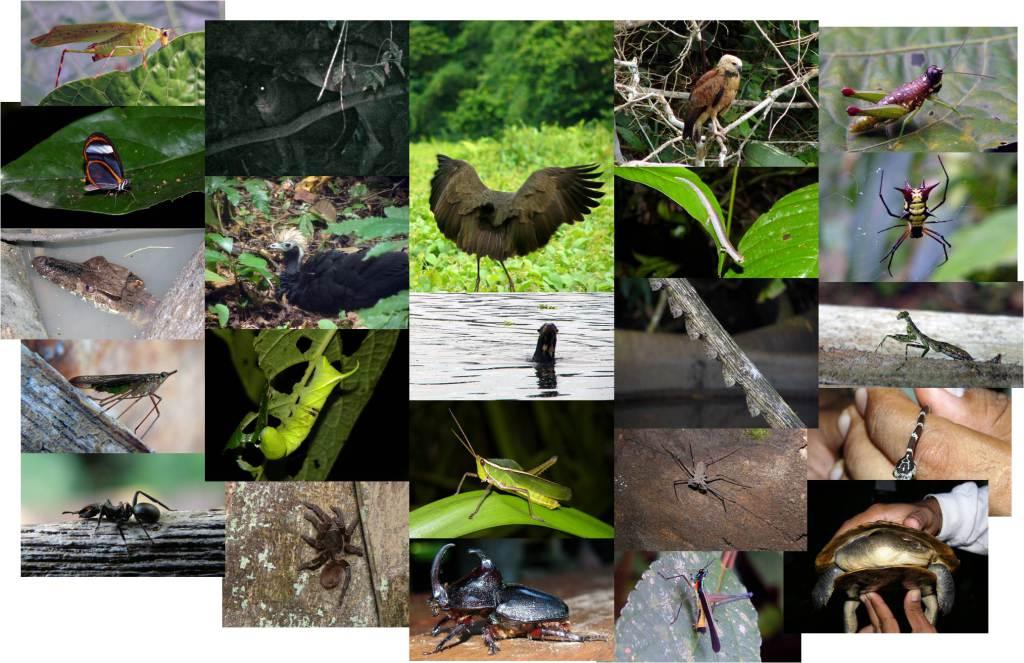 Breve mostra da fauna observada na nosa visita a Manu (fotos: G. Mucientes / BEC)