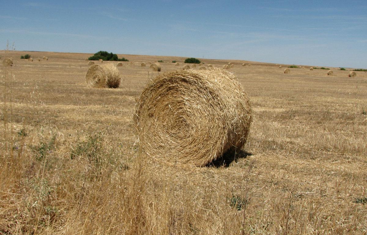 A investigación busca sacar proveito da palla do cereal.