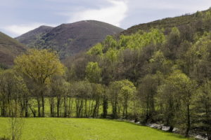 Os solos de Galicia acumulan máis de 500 millóns de toneladas de CO2.