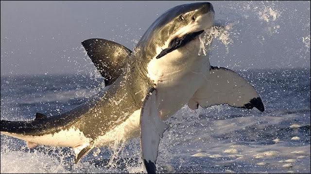 shark06_640_1999