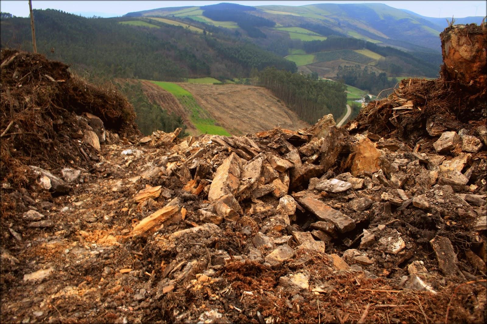 Os eucaliptos están a esnaquizar o patrimonio arqueolóxico do norte de Lugo.
