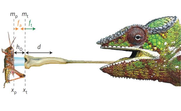 A saliva dos camaleóns é un potente adherente de grandes presas. / Fabian Brau et al.