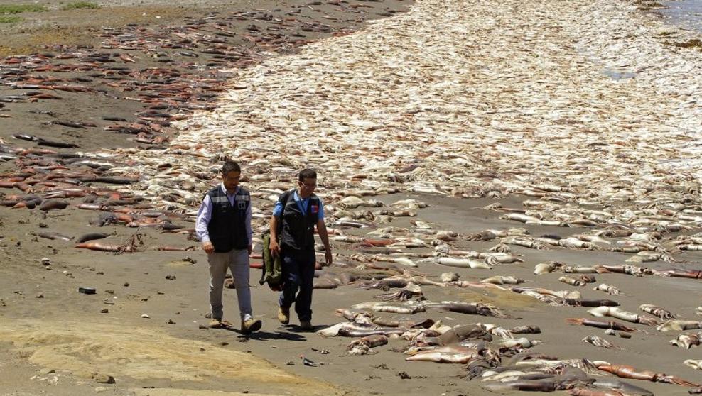 chile mortalidad peixes