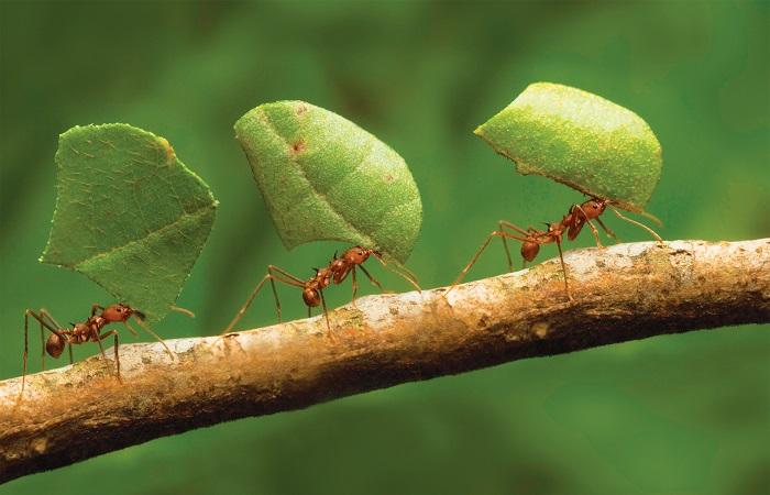 formigas traballando