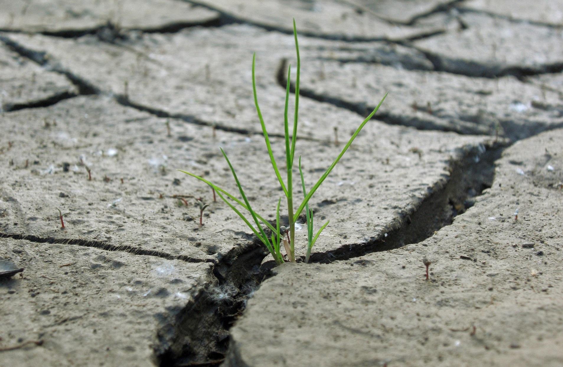 As secas e outros fenómenos estremos centran o congreso.