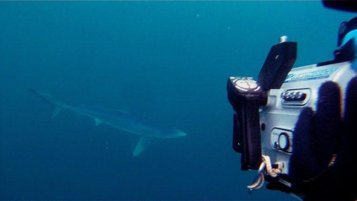 Un gran tiburón azul