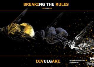 Divulgare breaking the rules