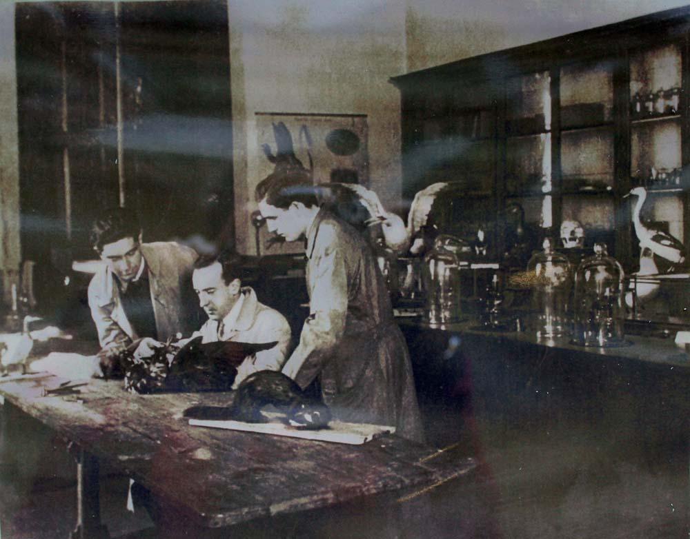 Luis Iglesias, traballando no laboratorio de taxidermia.