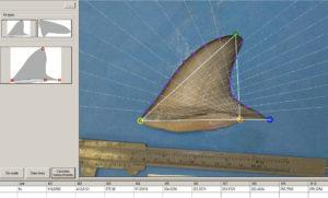 ISharkFin analiza as aletas dos tiburóns para identificalos. Foto: DUVI