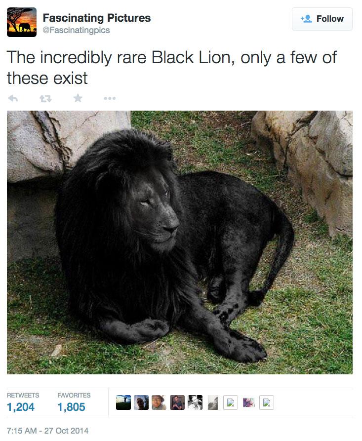 black-lion-fake