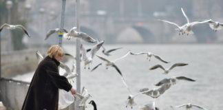 As gaivotas adaptáronse a vida nas grandes urbes. Foto: Giles San Martin.