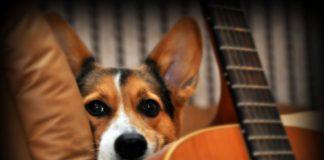 Os cans entenden algunhas formas da fala humana. Foto: Lon Martin.