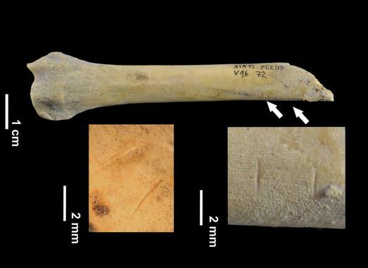 Os ósos de can atopados presentan mordedelas de humanos.