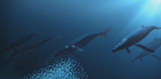 O vídeo 'A saúde dos nosos océanos' acumula premios internacionais.