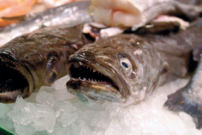 A pescada supón a cuarta parte do consumo de peixe fresco en España.