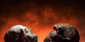 Á esquerda, un cráneo humano moderno, con barbela, e á dereita, o dun neardental.