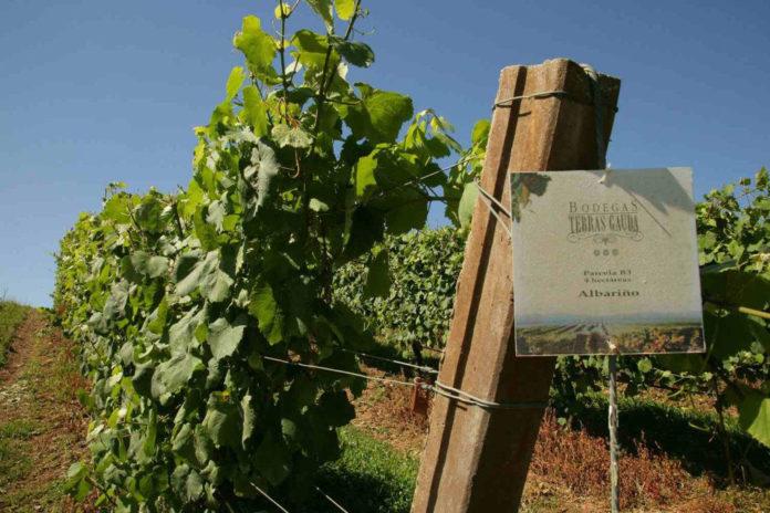 Vineyards of Terras Gauda