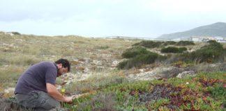 Sergio Roiloa analizando uña de gato na costa de Portugal.