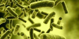 Moitas bacterias E-coli son resistentes aos antibióticos convencionais.