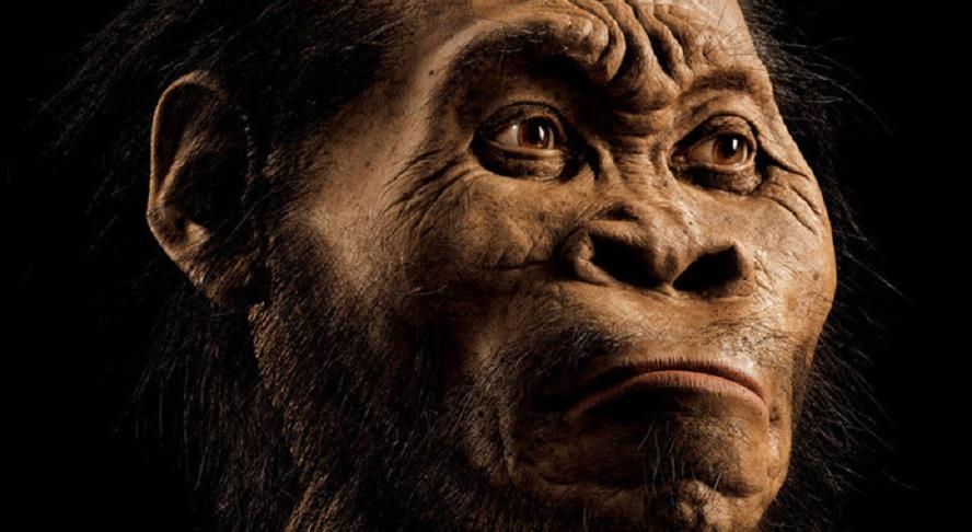 Un equipo internacional de científicos vén de describir unha nova especie de homínido, chamada Homo naledi, cuxa morfoloxía se sitúa entre os xéneros Australopithecus e Homo. Os científicos, que descoñecen aínda cando viviu este homínido, acharon os restos de polo menos 15 individuos desta especie no depósito Dinaledi en Sudáfrica. Cunha capacidade cranial de ao redor de 500 cm3, moito menor que a de humanos actuais, Homo naledi tiña características moi próximas ao xénero Homo en canto a mastigación, manipulación e locomoción refírese. Non obstante pola estrutura do seu torso e o xogo do tórax coa pelve, á parte da capacidade cranial, achegaríase máis a Australopithecus, un xénero de primates homínidos que desapareceu hai uns dous millóns de anos. Estes fósiles indican que a evolución de aspectos tan importantes como a manipulación e a locomoción se produciu independentemente da encefalización, é dicir, antes do aumento do tamaño cerebral. A revista National Geographic dedica a súa portada a este novo homínido e lle pon esta faciana.