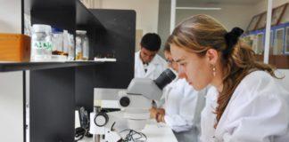 A aplicación calcula as probabilidades de chegar a ser investigador principal.