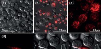 Cristalización de proteínas observada polo CIQUS.