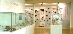 Espazo dedicado ás aves.