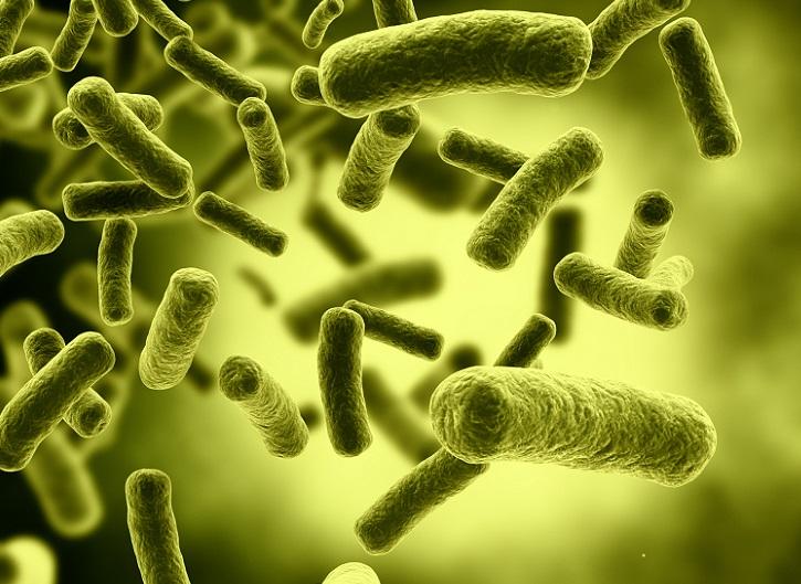 Bacterias E. Coli, responsables de contaminacións alimentarias.