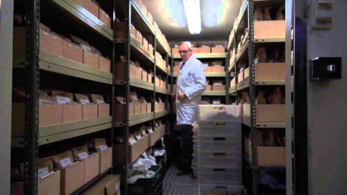O banco de sementes de leguminosas da Misión Biolóxica de Galicia.