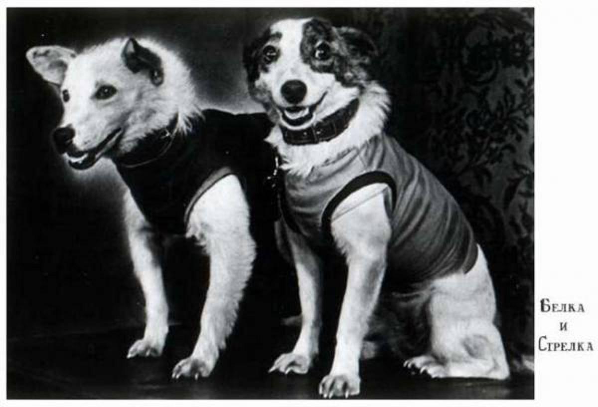 Belka (Branquiña) e Strelka (Frechiña), retratadas cos seus traxes de cosmonautas.