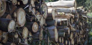 Ence inviste 122 millóns de euros en madeira ao ano en Galicia.