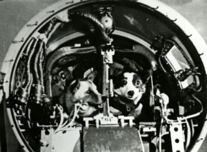 Belka e Strelka, a bordo do Sputnik 5.