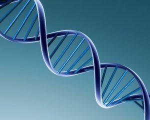 A molécula do ADN.