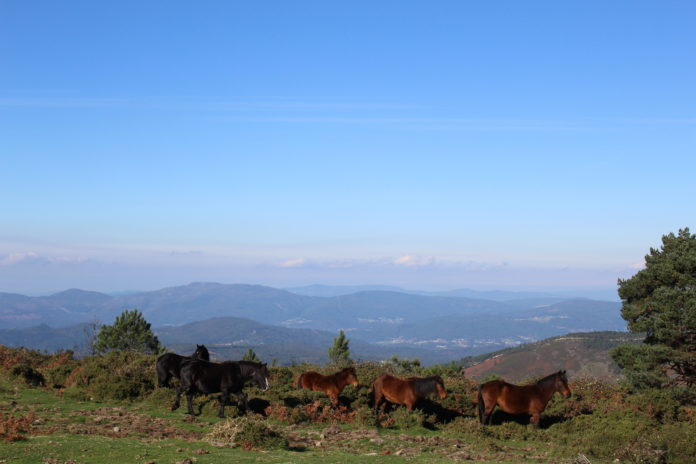 Montes de A Cañiza a principios do mes de novembro de 2015/ Meteogalicia