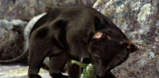 Imaxe do vídeo de Divulgare.